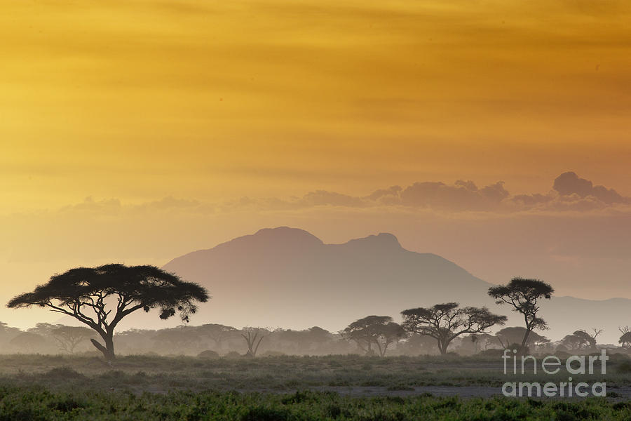Beak Photograph - Beautiful Sunset In Kenya 03 by Andrzej Kubik