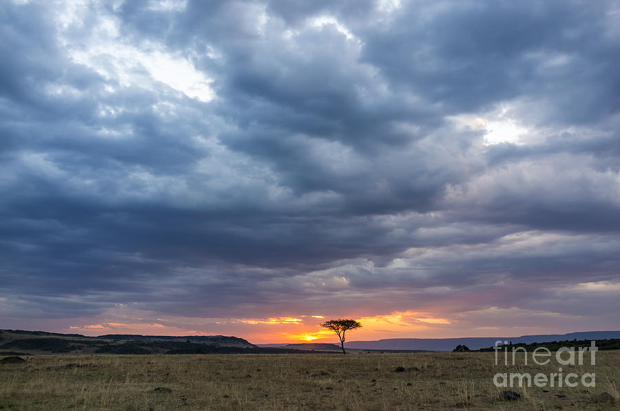 Game Photograph - Beautiful Sunset In The Savannah by Lmspencer