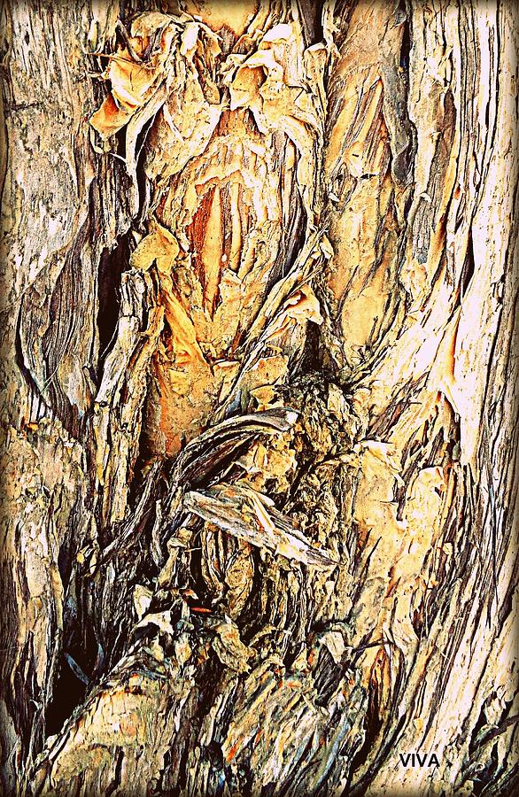 Beautiful Tree Bark Study by VIVA Anderson