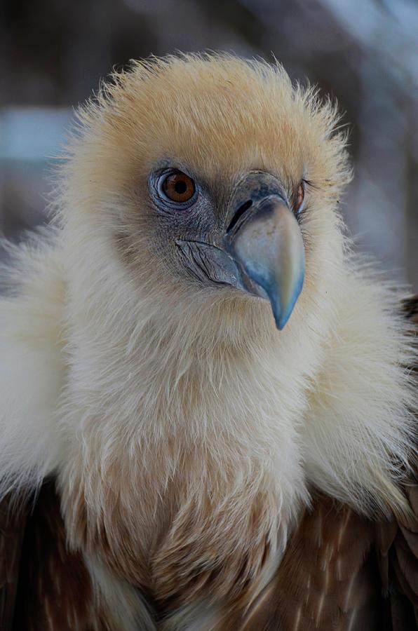 Beautiful Vultures by Darren Weeks