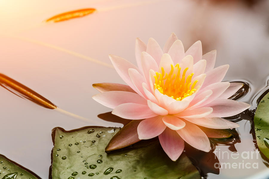 Romance Photograph - Beautiful  Waterlily Or Lotus Flower by Zhao Jiankang