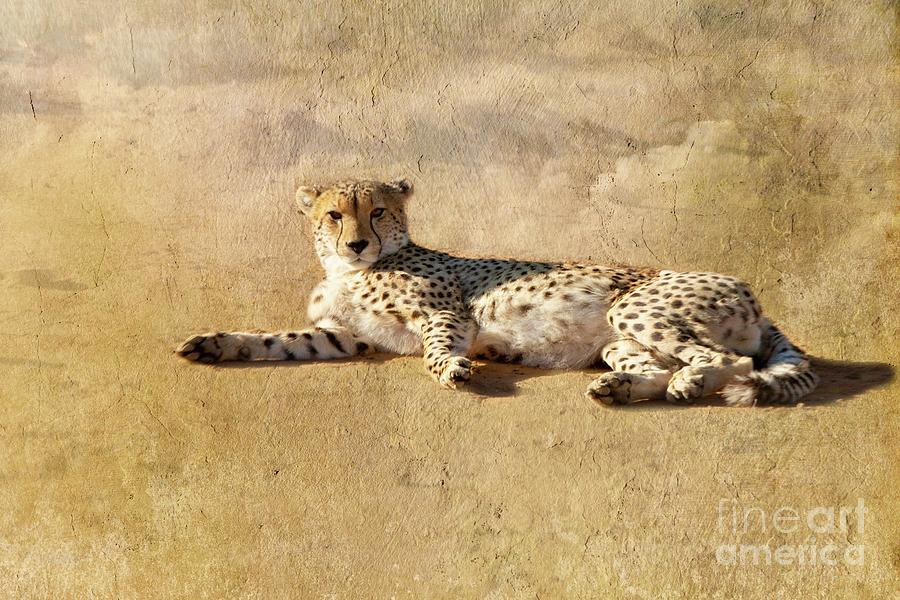 Beautiful wild cheetah relaxing by Patricia Hofmeester
