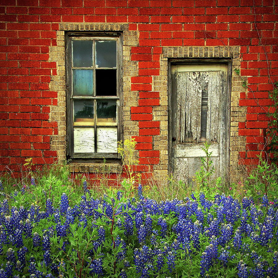 Beauty and the Door SQUARE - Texas Bluebonnets wildflowers landscape door flowers by Jon Holiday