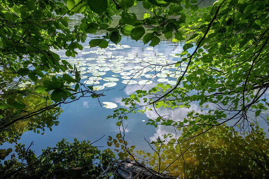 beauty at a lake near Swieta Lipka, Masurian Lake District by Dubi Roman