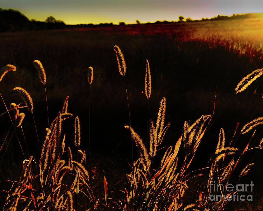 Beauty in Weeds by Randy J Heath