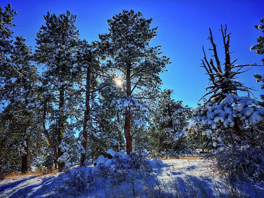 Beauty of Snow by Dan Miller