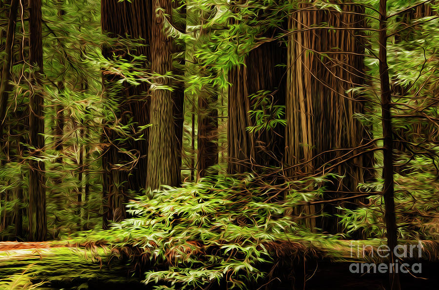 Beauty Of The Redwoods by Bob Christopher