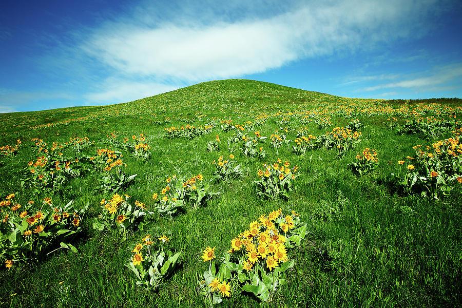 Yellow Photograph - Beaver Creek Flowers by Todd Klassy