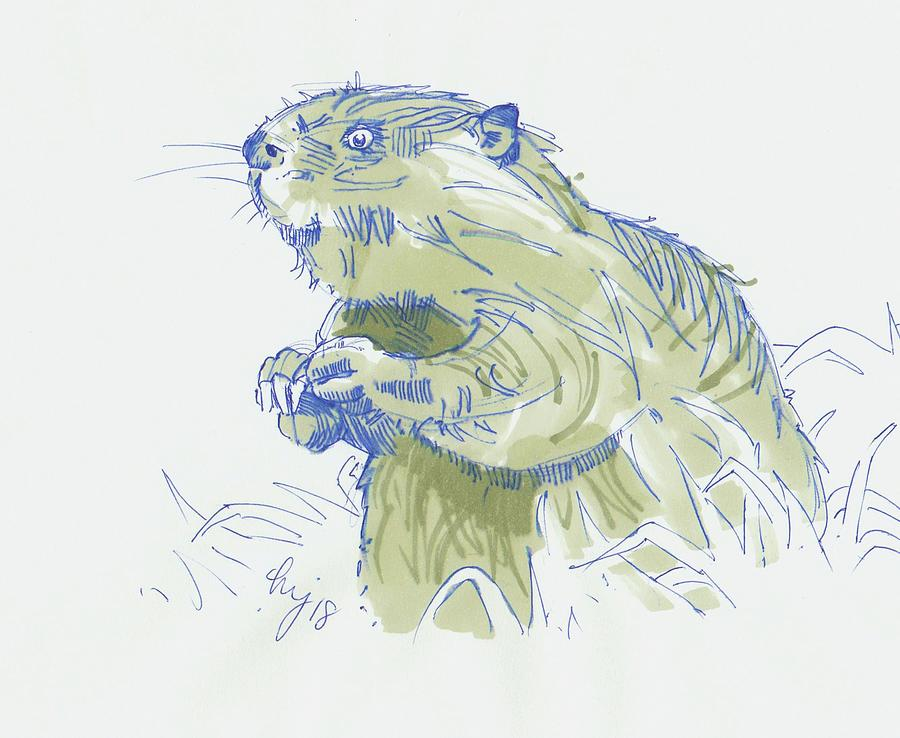 Beaver Drawing by Mike Jory