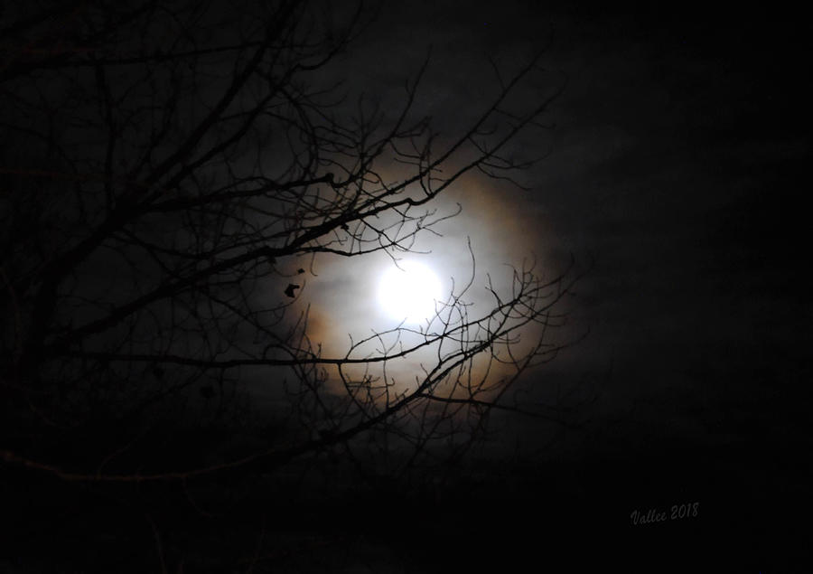 Moon Photograph - Beaver Moon by Vallee Johnson
