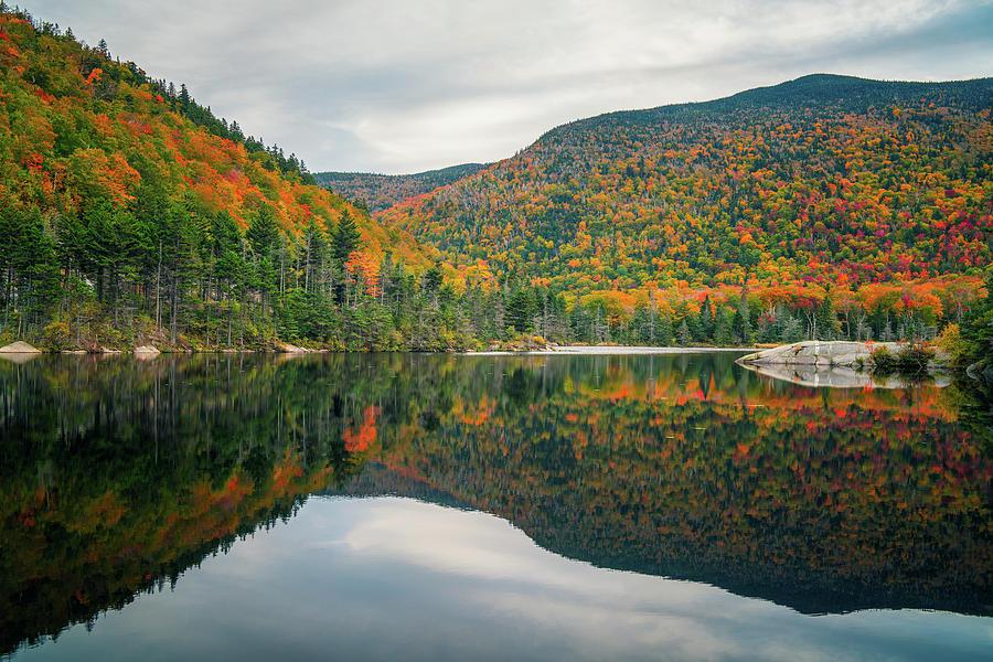 Beaver Pond by James Billings