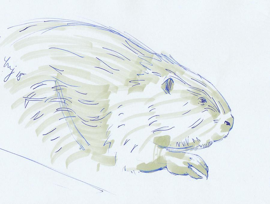 Beaver sketch by Mike Jory