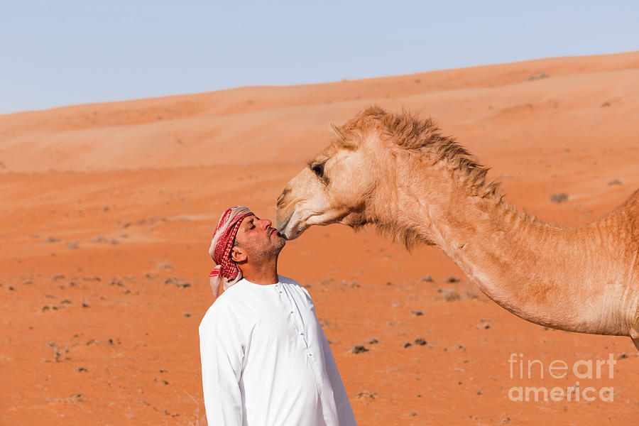 Bedouinn Kisses His Camel Photograph by Westend61