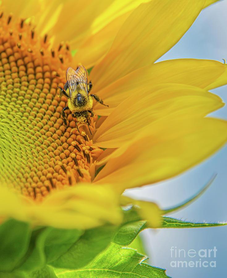 Bee beautiful by Jackie Johnson