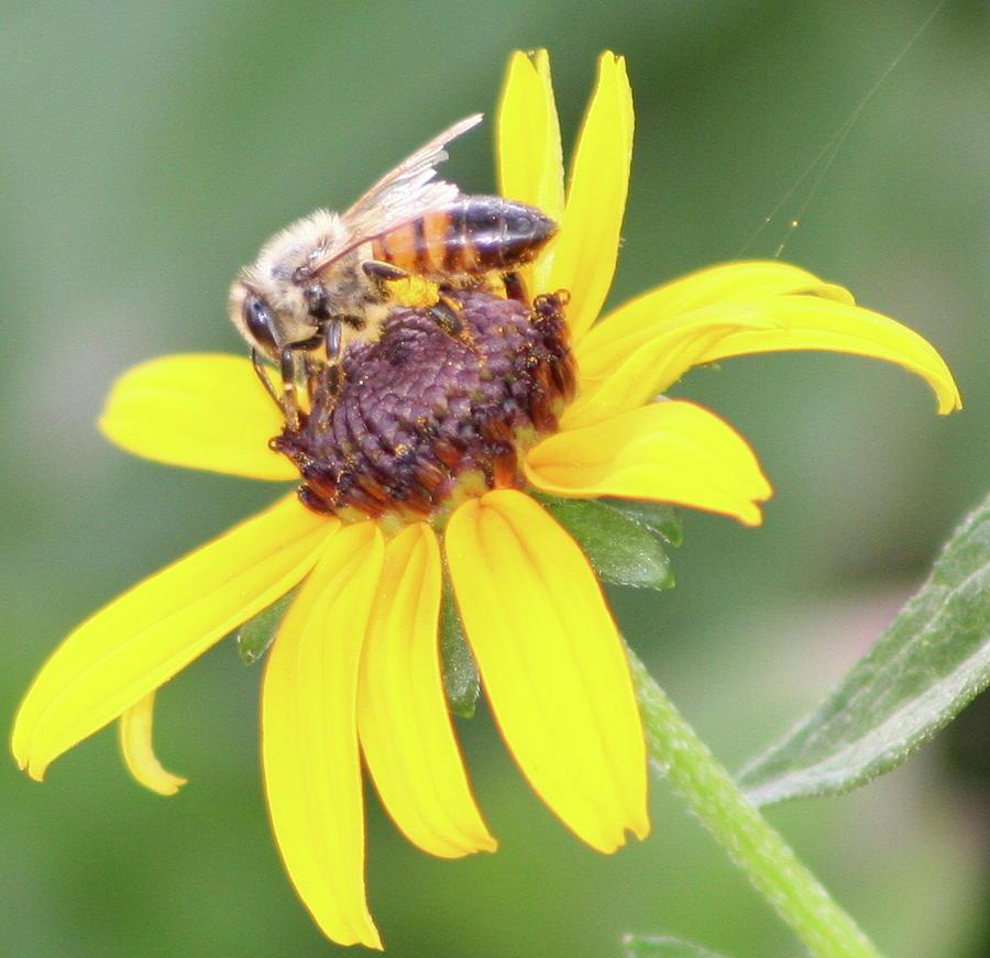 Bee Breakfast by Misty Morehead
