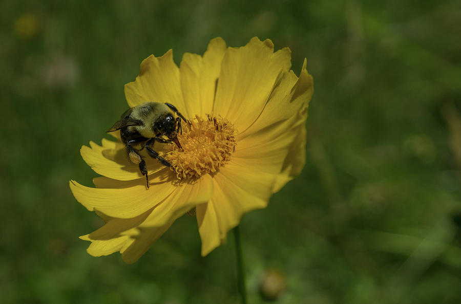 Bee Happy by Linda Howes
