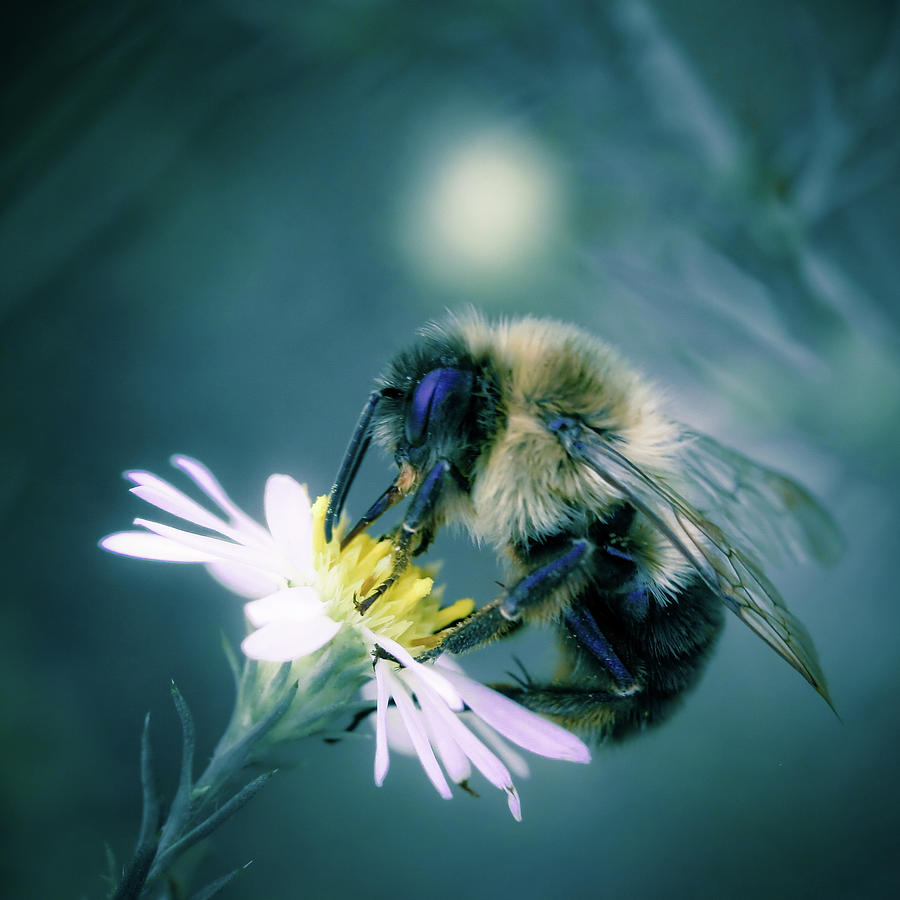 Bee On Flower Photograph by Steven Brisson Photography