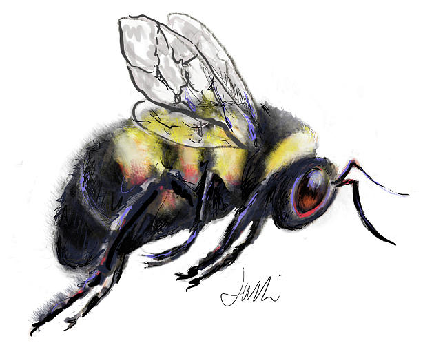 Bee Painting with Ipad Pro by Jacki Kellum