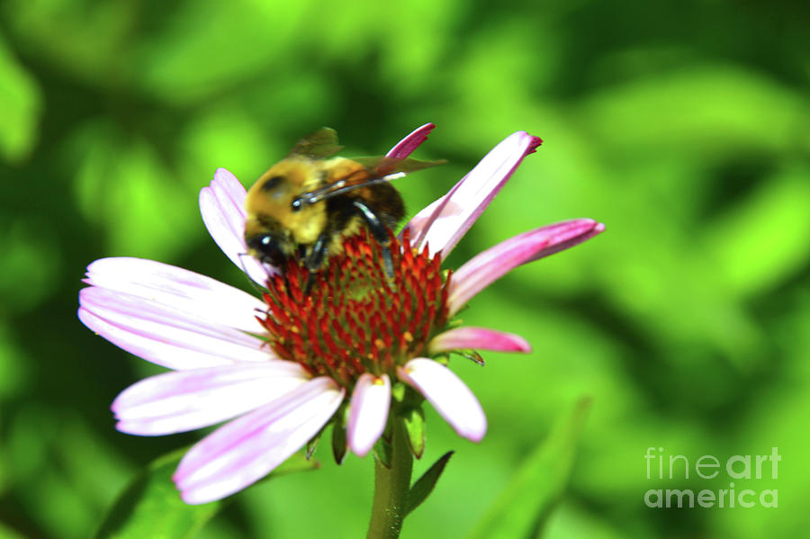 Bee Wildly Happy by Robyn King