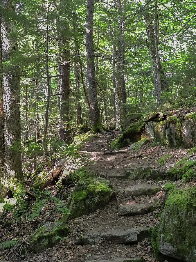 Beech Mountain trail Acadia National Park by NaturesPix