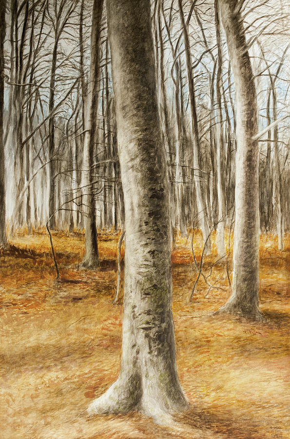 Beech Trees by Hans Egil Saele