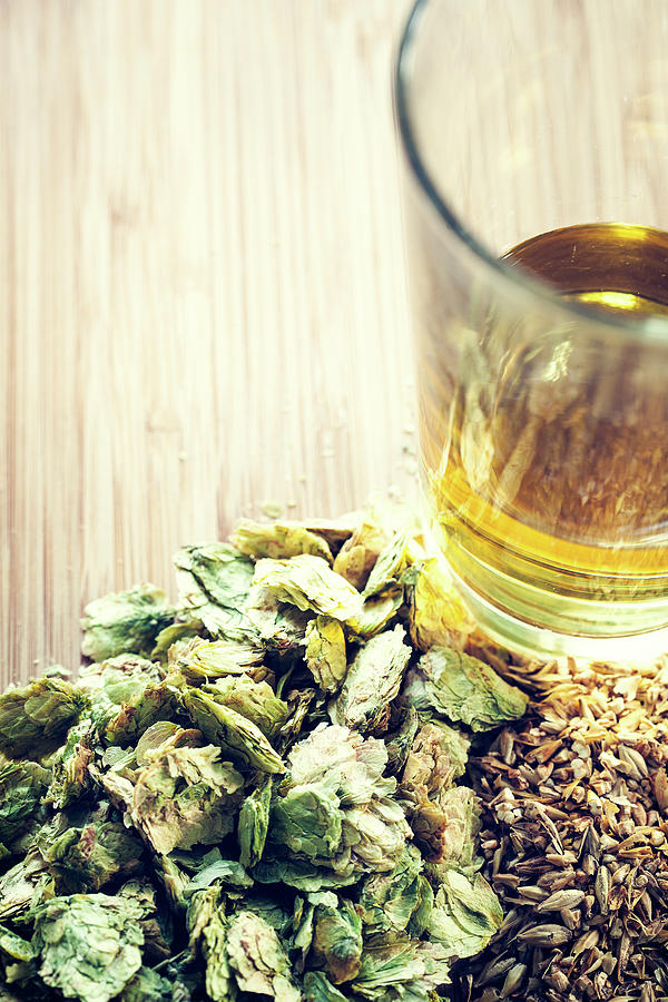 Beer With Organic Hops And Malted Barley Photograph by Ryanjlane
