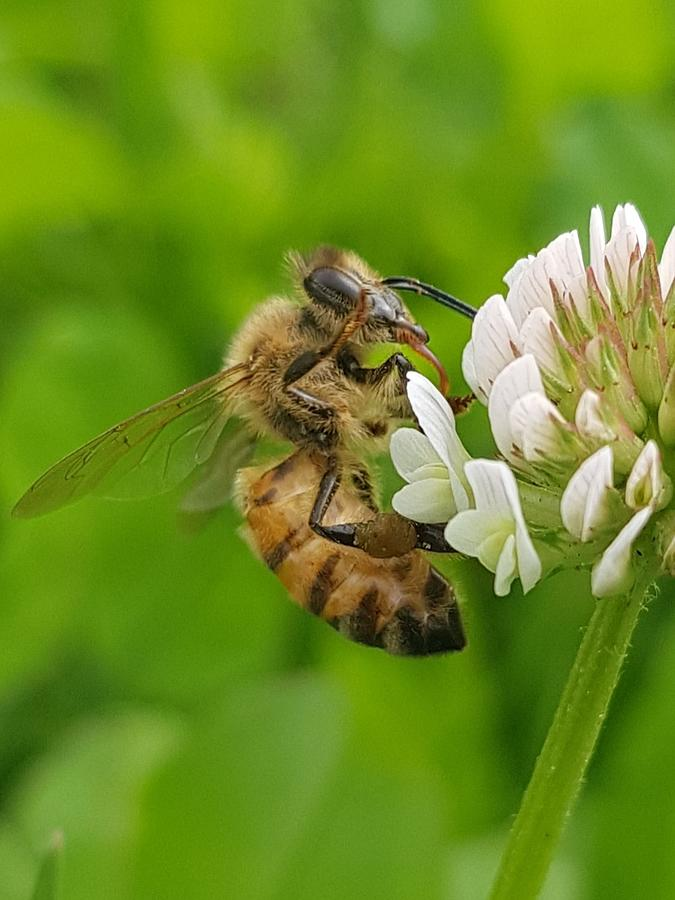 Bees And Life Flourishes Photograph