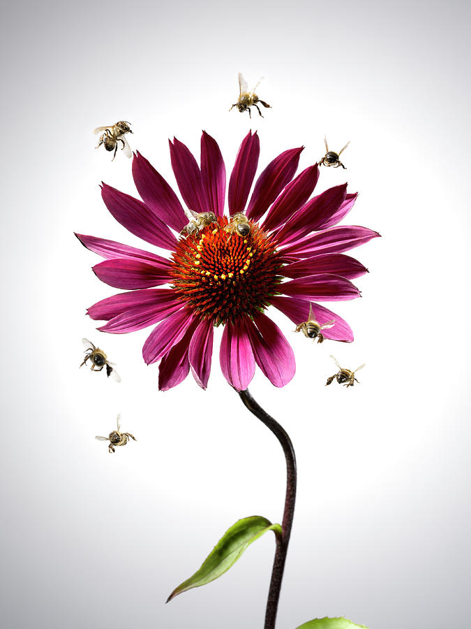 Bees Flying Around Blooming Flower Photograph by Andy Roberts