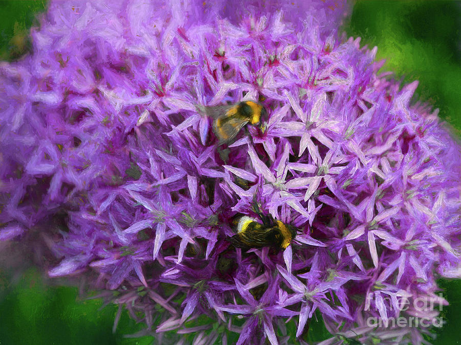 Allium Mixed Media - Bees In The Alliums by Helen White