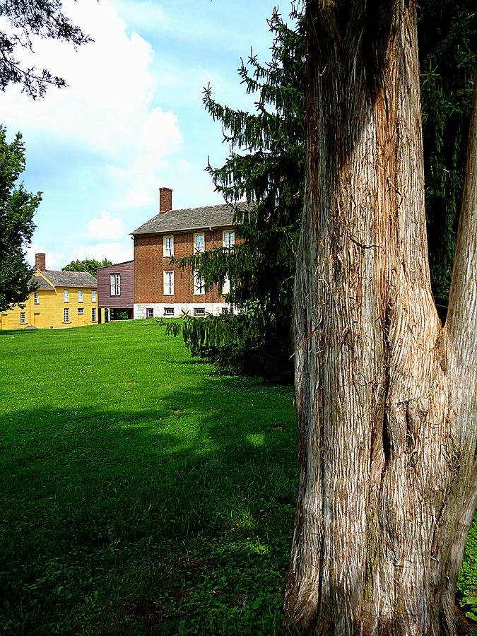 Behind Ye Olde Tree Stump by Michael McBrayer
