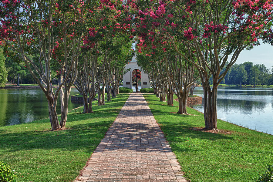 Furman University Bell Tower Path Photograph