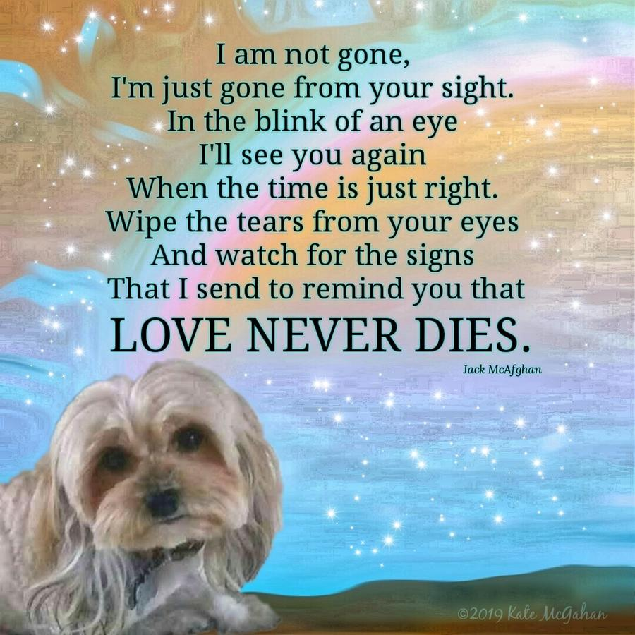 Canine Digital Art - Bella Boo Love Never Dies by Kate McGahan