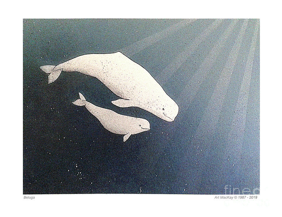 Beluga and Calf by Art MacKay