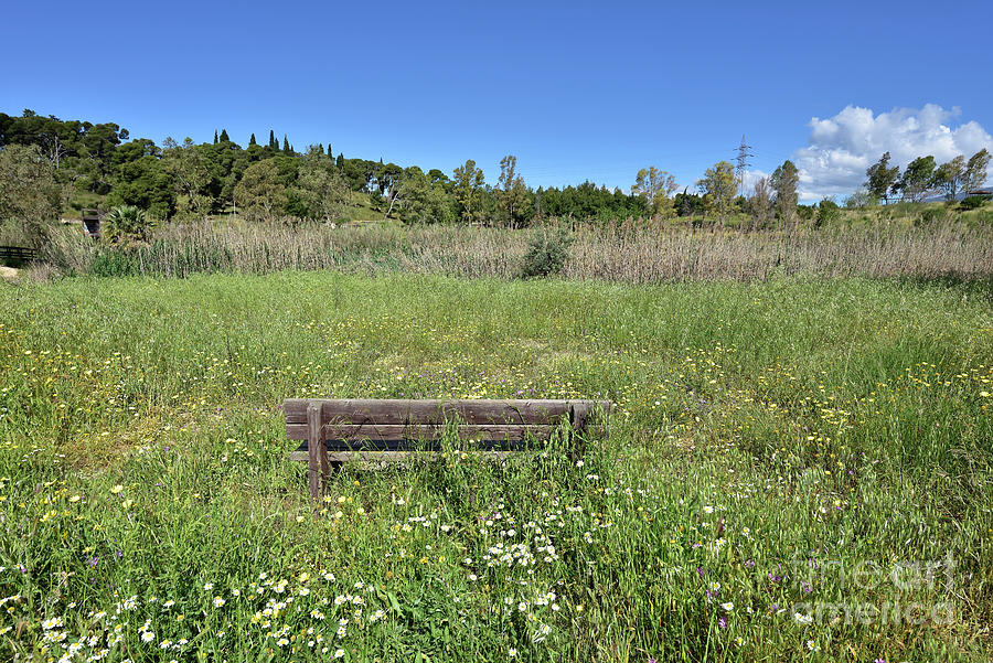 Bench among wild flowers by George Atsametakis