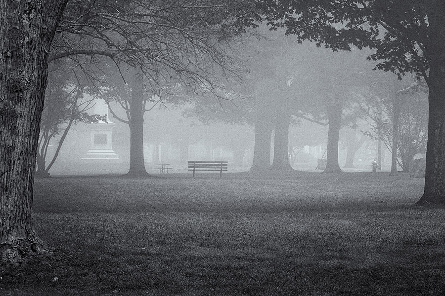 Bench In Fog by Tom Singleton