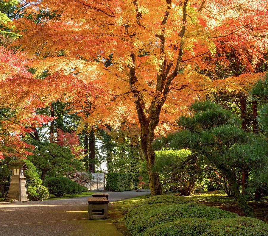 Bench in Japanese Garden by Jean Noren