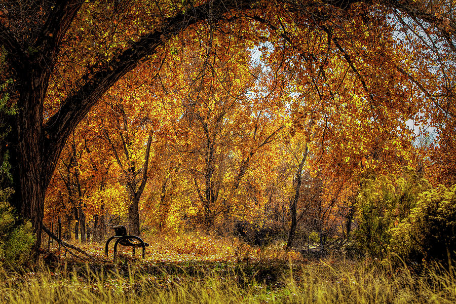 Bench with Autumn Leaves  by John A Rodriguez