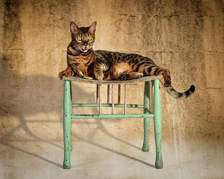 Bengal On His Throne by Wes and Dotty Weber