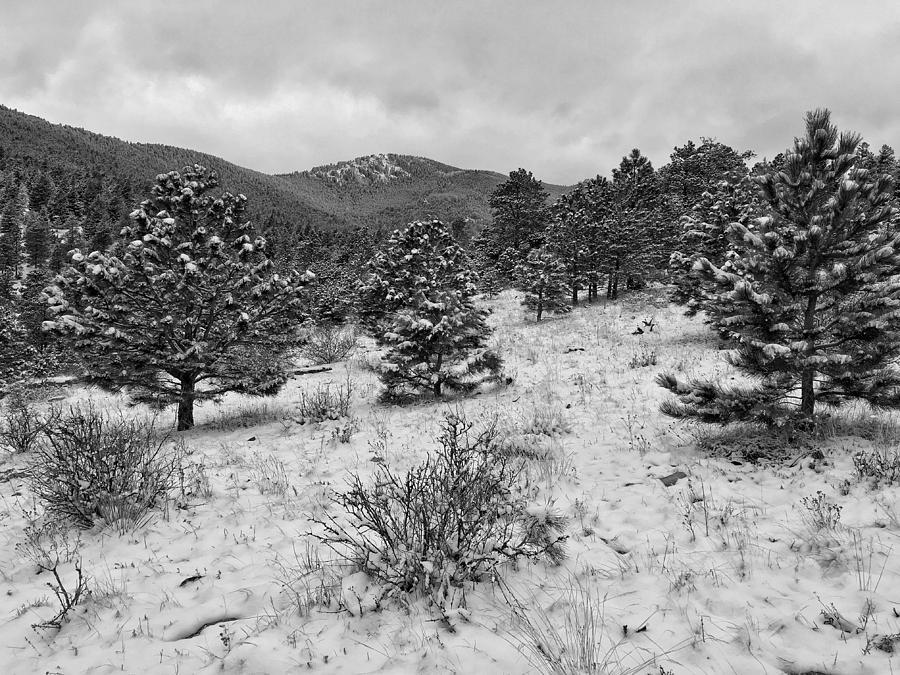 Bergen Peak Black and White by Dan Miller