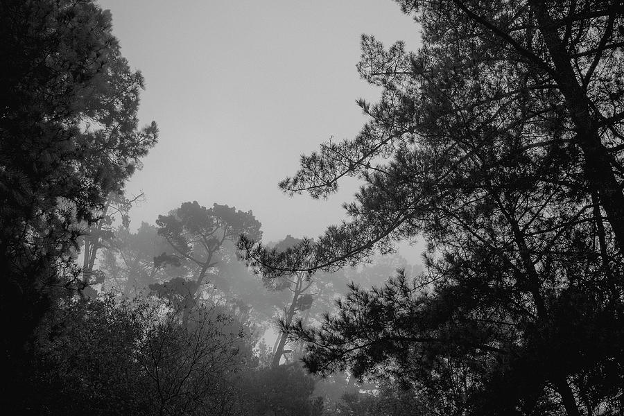 Berkeley Hills Forest by Patrick Cosgrove