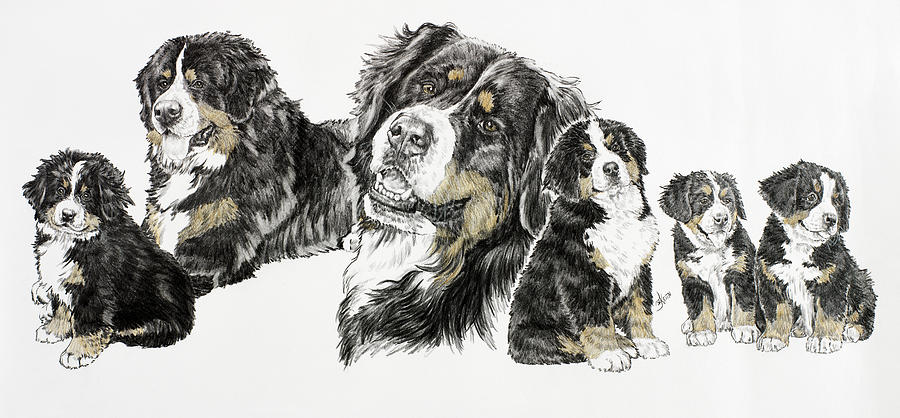 Bernese Mountain Dogs Painting - Bernese Mountain Dog by Barbara Keith