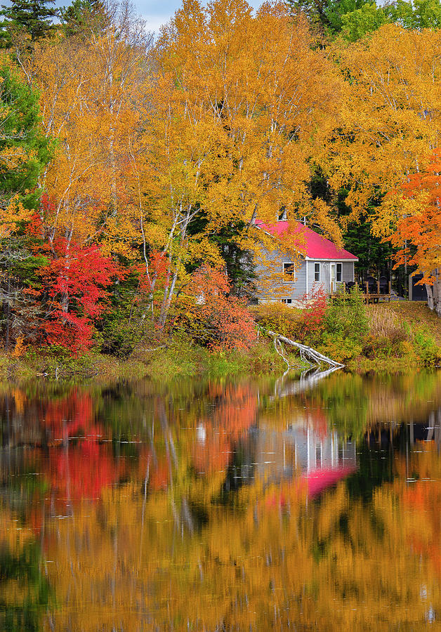Best Place For A Cottage by Mark Papke