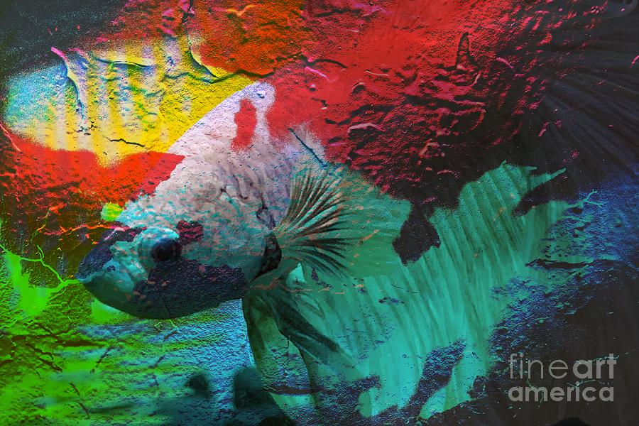 Beta Fish on Stone by Paul Wilford