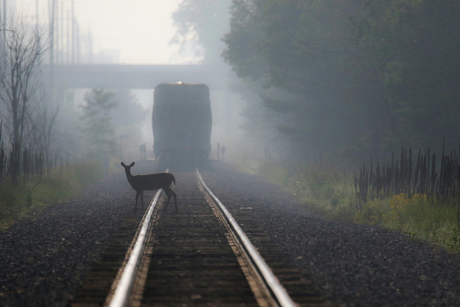 Beyond The Caboose by Brook Burling