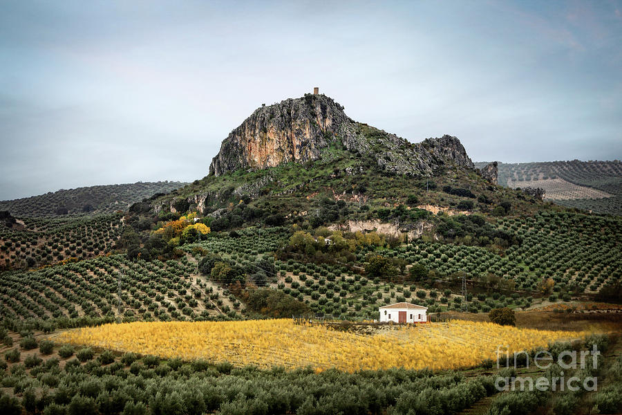 Beyond The Olive Tree Hills Photograph