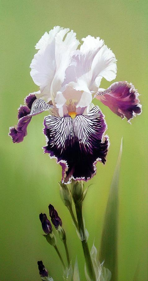 Bi Colored Iris Flower Fragment Painting By Alina Oseeva
