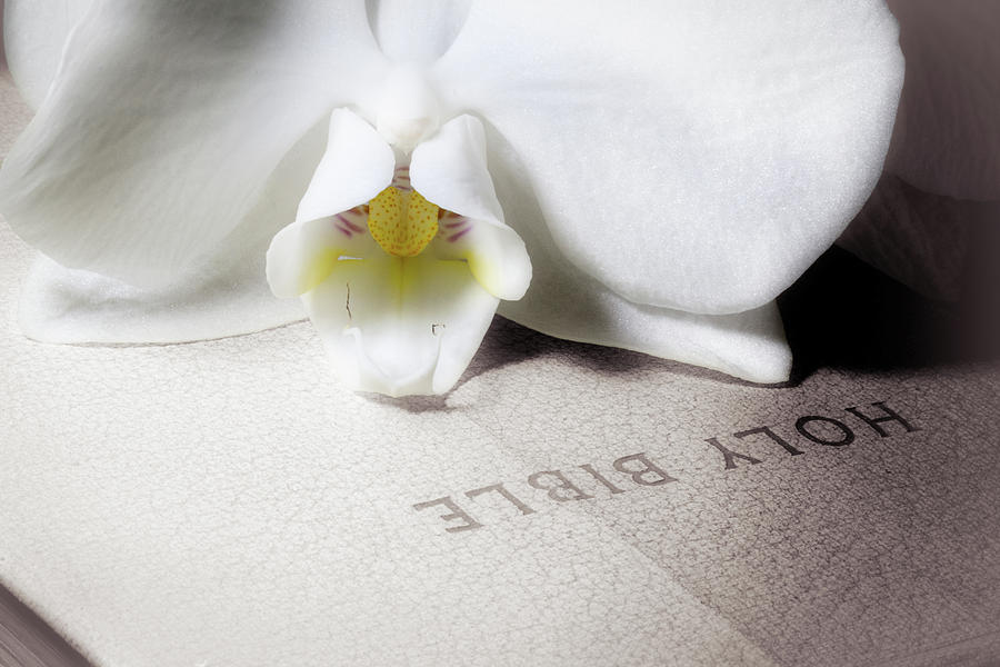 Bible with White Orchid by Tom Mc Nemar