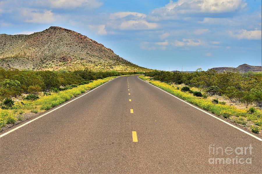 Big Bend N. P.- Desert Marigolds Photograph