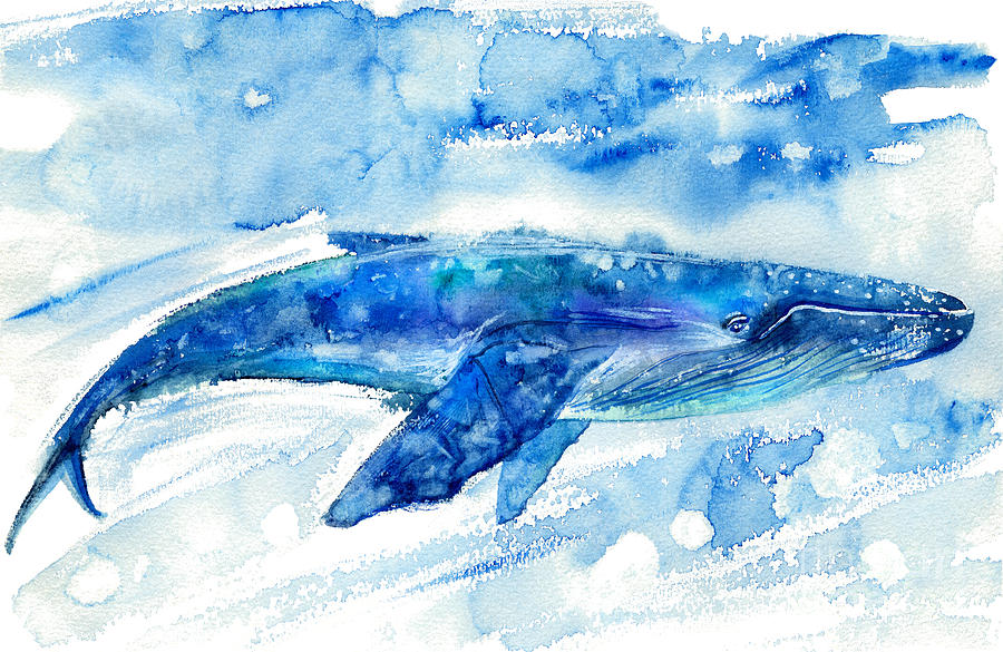 Blot Photograph - Big Blue Whale And Water.watercolor by Jula lily