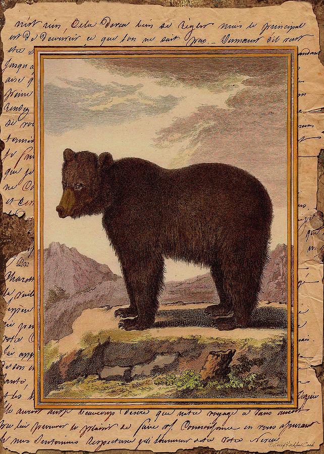 Big Brown Bear by Terry Kirkland Cook